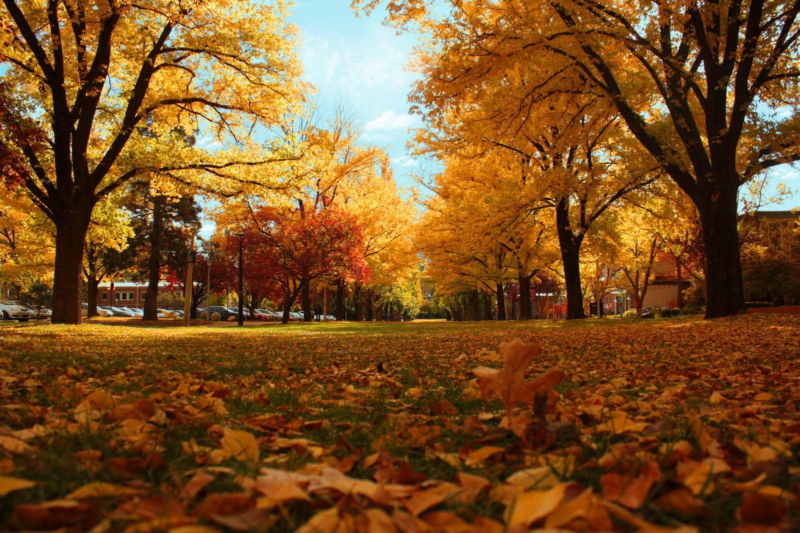 Getting Your Car Ready For Fall Winter